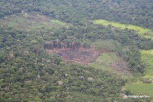 clear cut rainforest Peru