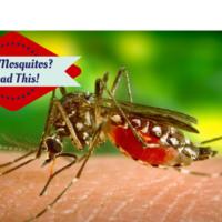eco-friendly mosquito traps