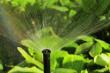 ist1_6505376-water-sprinkler