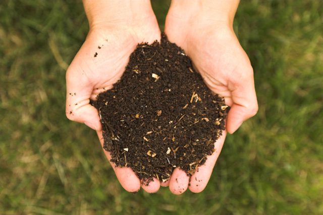 compost to reduce food waste