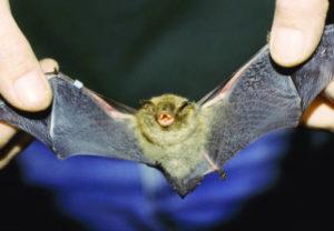 why love bats