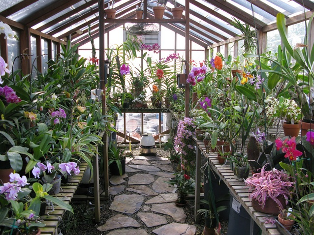 5 Reasons Why You Should Build Your Own Greenhouse Big