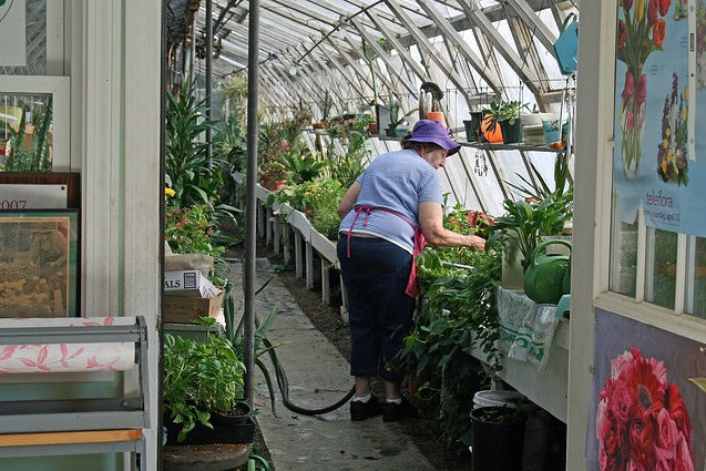 5 reasons why you should build your own greenhouse big for How much does it cost to build a green home