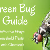 Green Bug De-Tox