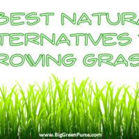 reduce lawn watering