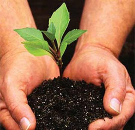 Ecosia tree plant