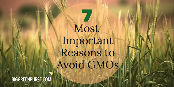 Important reasons to avoid GMOs
