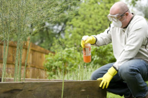 16079-a-man-spraying-a-pesticide-on-some-plants-in-his-garden-pv