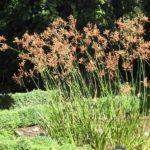 native plants in your garden