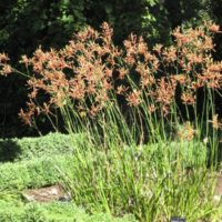 native plants in your garden