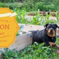 plants poison pets