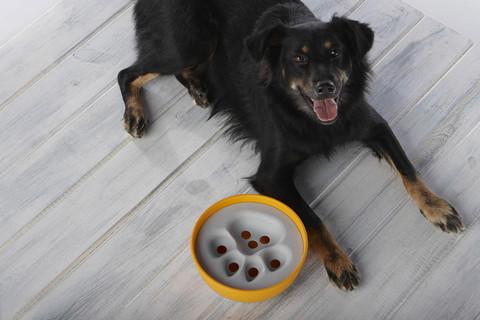 Ecofriendly dog food bowl