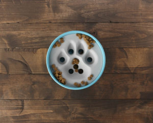 eco-friendly dog food bowl
