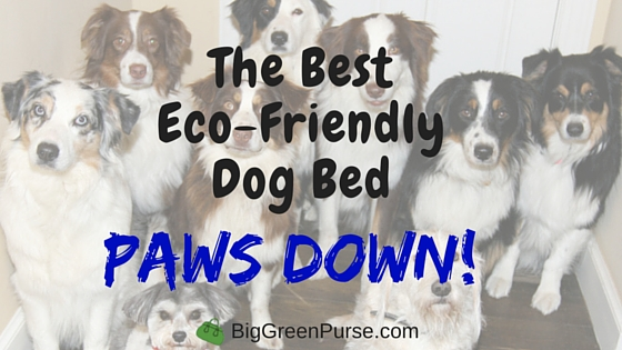 best eco-friendly dog bed