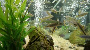 fish-tank-632759_640