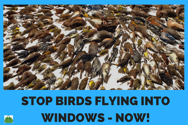 stop birds flying into windows