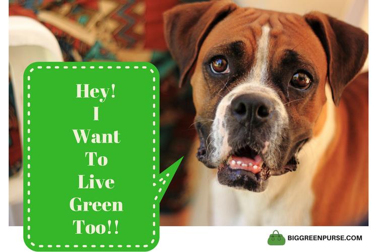 sustainable pet food